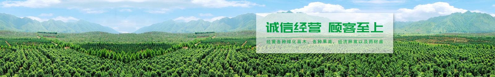 水果苗木價格